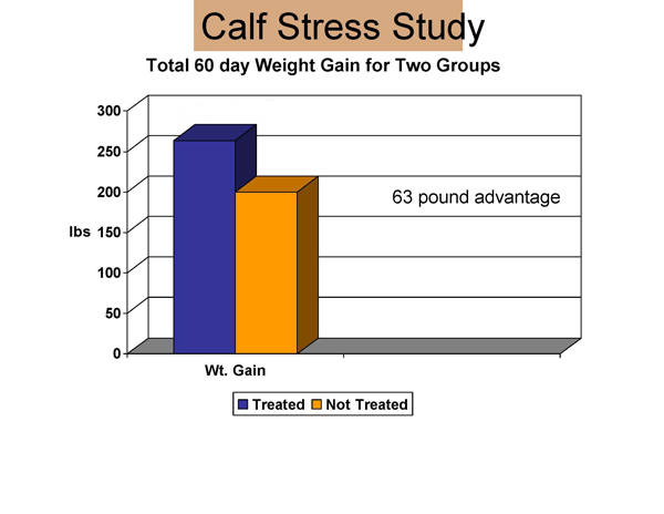 Calf stress graph